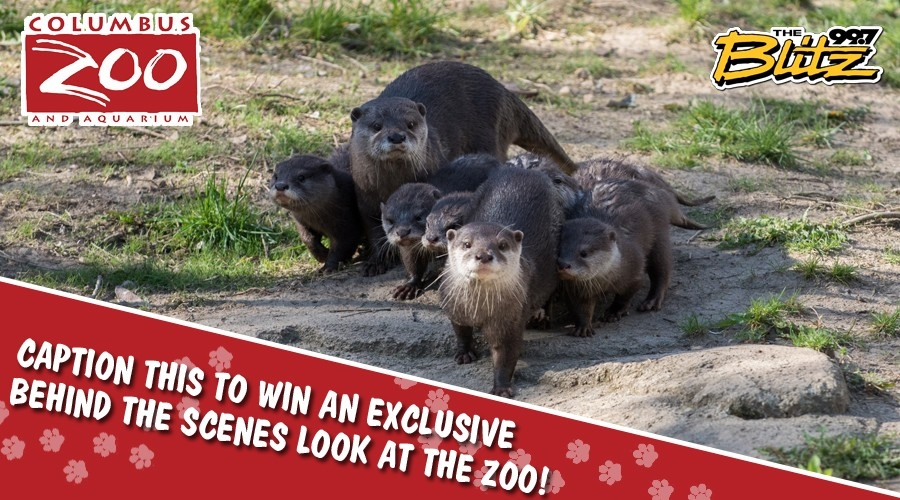 Win A Wild Encounters Tour at the Zoo