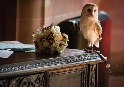 Owl Attacks Groomsman
