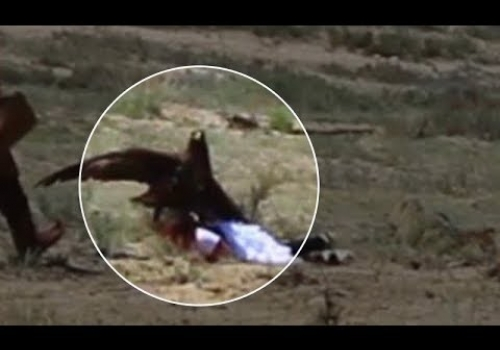 8-Year-Old Attacked by Golden Eagle